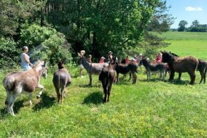walk with donkeys1