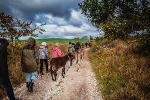 walking with donkeys 3
